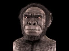 jenis manusia purba Homo Soloensis