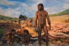 jenis manusia purba Pitecanthropus Soloensis