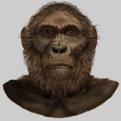 jenis manusia purba Pitecanthropus Robustus