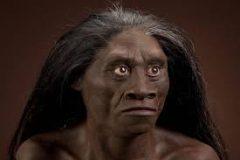 jenis manusia purba Pitecanthropus Mojokertensis